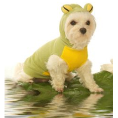 Hoodie Frog Costume