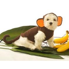 Hoodie Monkey Costume