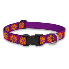 Lupine Pet Flower Box Collar
