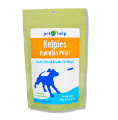 Pet Kelp Kelpies Pumpkin Point